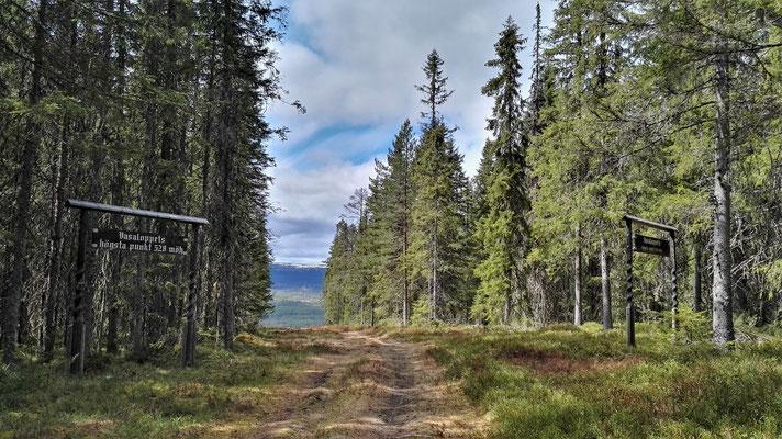 Gegen Mittag auf dem höchsten Punkt des Vasaloppsleden ist endlich der Sommer zurück, doch nicht für lange...