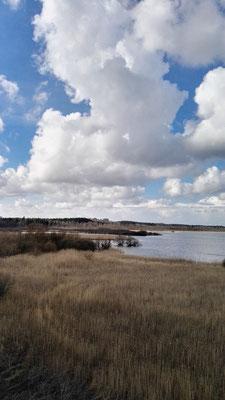 Herrliche Aussicht vom Vogelbeobachtungsturm am Krankesjön