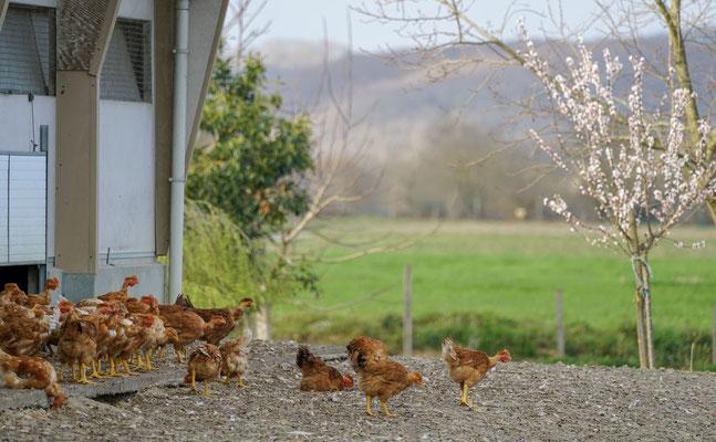 Lait Pots d'vaches - Ferme Larrouture - Maspie - tourisme Nord Béarn Madiran