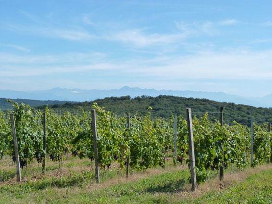 Vignoble et vin du Madiran et Pacherenc du Vic-Bilh