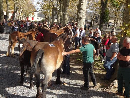 4 Fête cheval morlaàs tourisme nord bearn créadit mairie morlaas