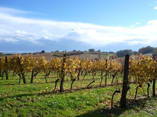 Vignoble et vin du Madiran