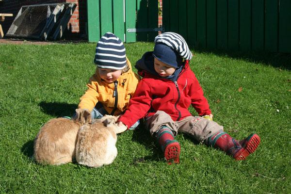 Kinder streicheln zwei Kaninchen