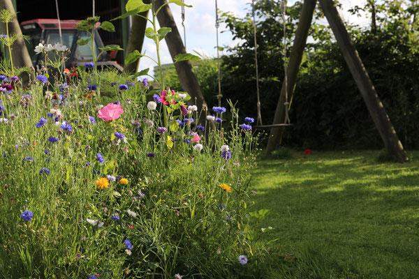 Bienenweide bei uns im Garten