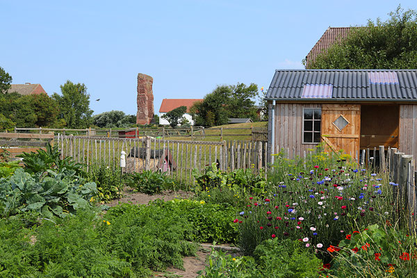 Gemüsegarten mit der Alten Kirche im Hintergrund