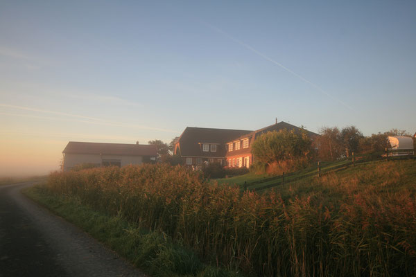 Morgenstimmung am Friesenhof