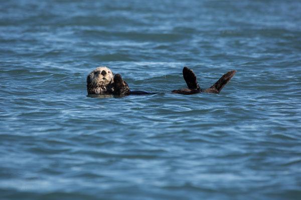 "Ausstellungs # 40 Format60x40cm Titel: ""Sea Otter"""