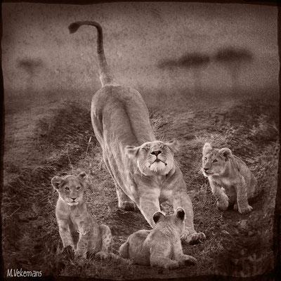 Charme et ses petits Kenya Masaï Mara juillet 2011