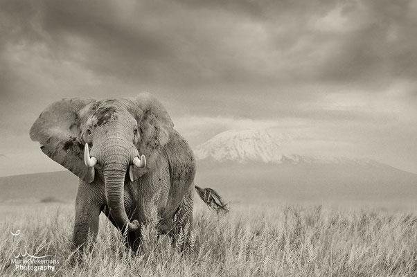 Kenya Amboseli février 2014