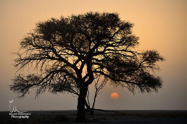Namibie dune 45
