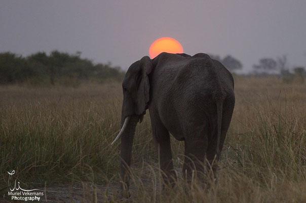 Mamili éléphant