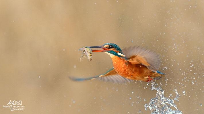 Martine à la pêche