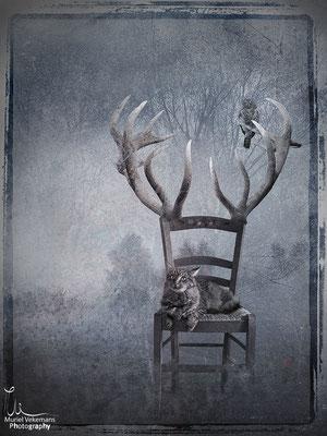 Une Chaise en bois