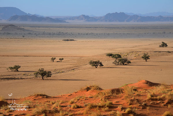 Sesriem Namib dune Elim