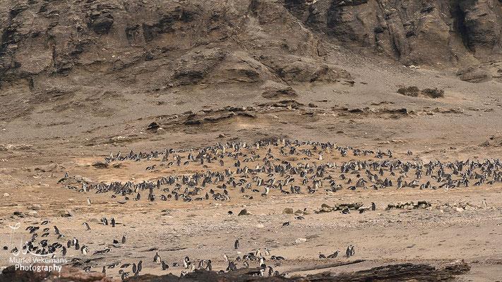 Lüderitz croisière ile d'halifax