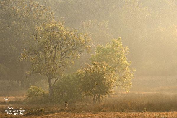 Bandhavgarh paysage avec cerf axis