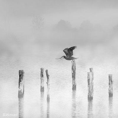 réserve ornithologique du teich France mai 2012