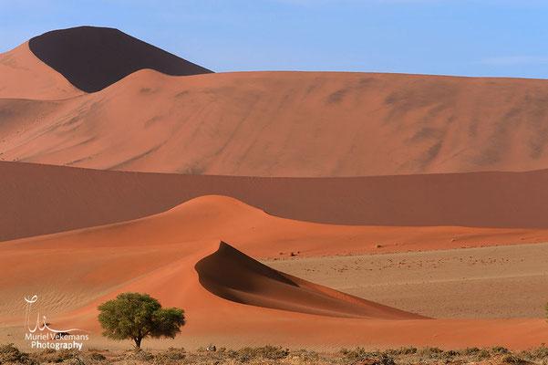 Sesriem Namib dunes