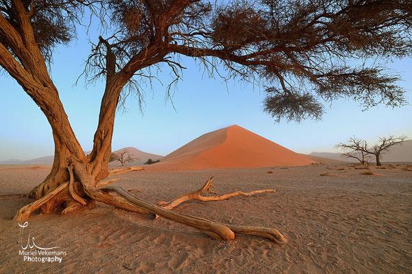 Sesriem Namib dunes 45