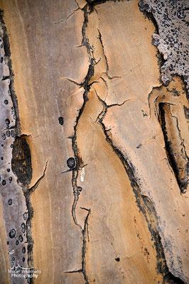 Keetmanshoop forêt d'arbres à carquois fin de journée