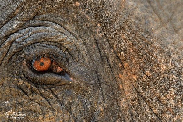 Éléphant travaillant dans la réserve