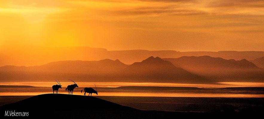 Namibie Namib