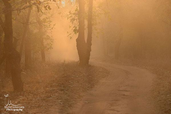 Bandhavgarh les pistes