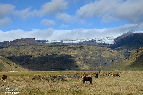 retour vers reykjavik