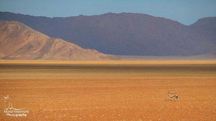 Gastehaus Namib rand