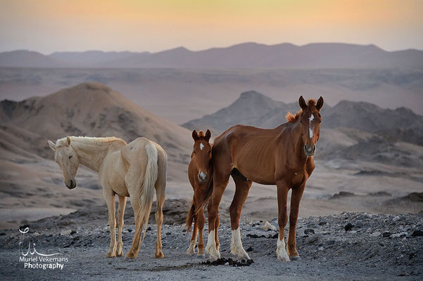 Homeb chevaux