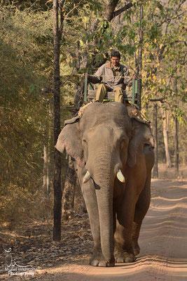 Éléphant travaillant dans le parc