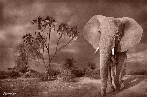 Kenya Samburu juillet 2011