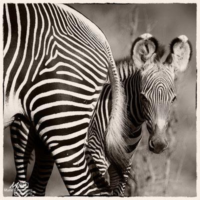 Kenya Samburu mars 2017
