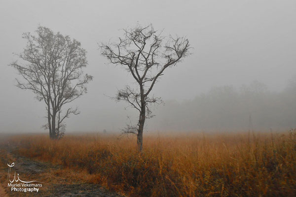 Bandhavgarh un matin brumeux