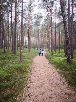 Wunderbarer, lichtdurchfluteter Wald