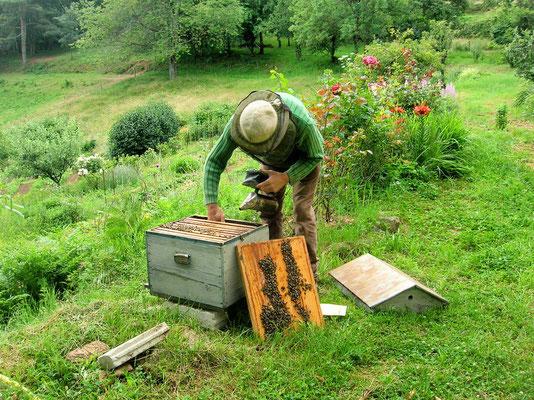 ou visiter une ruche près de la maison