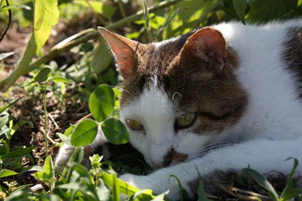 Caresser Doudou, notre chat