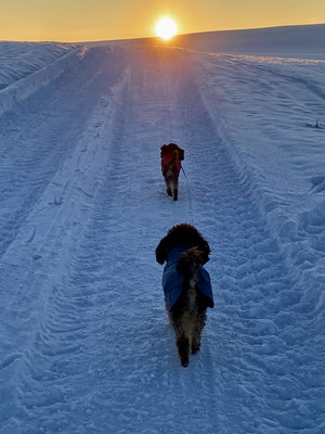 Django und Fanny im Schnee