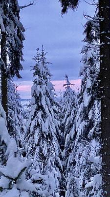 Schwarzwald in weiss