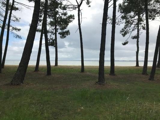 See von Bicarosse