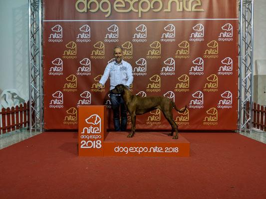 IDS Nitra Juni 2018