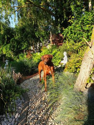 Damisi bei uns im Garten mit genau 4 Jahren