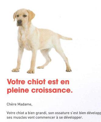 Courrier aux détenteurs de chiots labradors - CHANCEUX