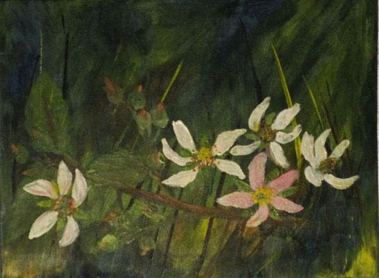 Brombeerzweig mi Blüten II, 2016, Acryl auf Hartfaser, 24 x 18 cm