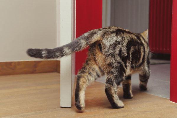 """Unsere freundliche Atelierkatze """"Charli"""" ist immer recht neugierig was in den Malkursen denn so passiert"""