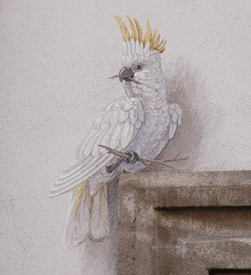 Der Kakadu ist ein Detail einer dekorativen Wandmalerei