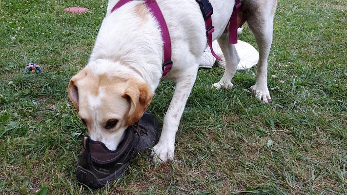 Schuhe findet sie klasse - kaputt ist dabei nie einer gegangen.