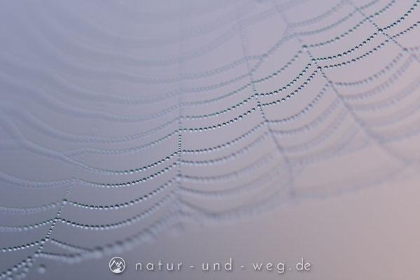 Schön, diese mit Tautropfen benetzten Spinnenfäden