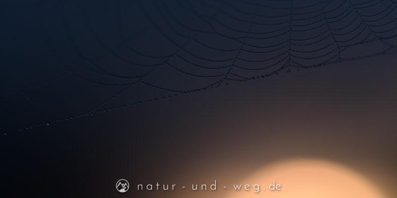 In den Tropfen spiegelt sich die durch den Nebel scheinende Sonne