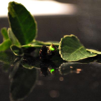 Andrea Weinke-Lau - Glühwürmchen